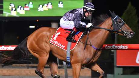 Houtzen will resume in the Fireball Stakes at Randwick on Saturday. Picture: Getty Images