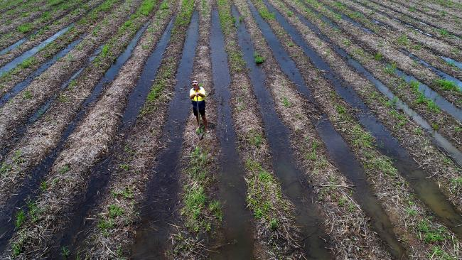 Smithfield sugar cane farmer John Westaway in wet water logged cane fields and he is looking forward to a lot more soakings this wet season. PICTURE: STEWART MCLEAN