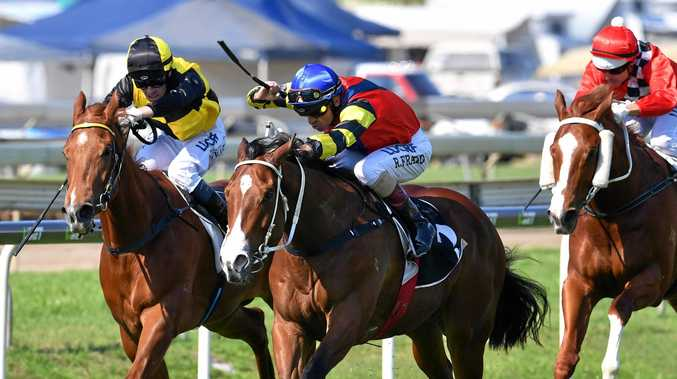 ON FIRE: Matthew Dunn gelding Snitz has been in fine form with Robbie Fradd in the saddle. He will be favourite in the Country Championships qualifier at Grafton tomorrow.