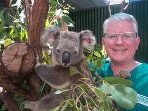 Fighting to save the Coast's koalas