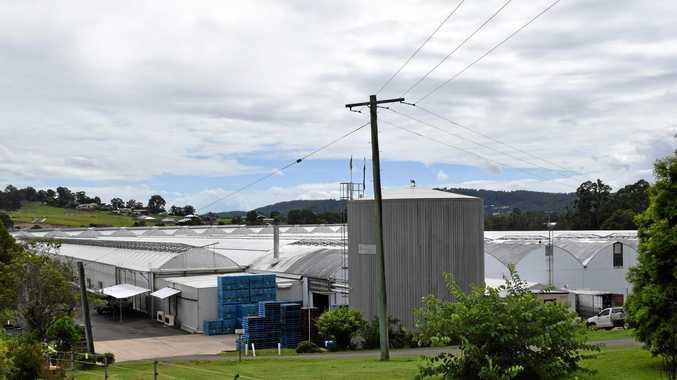 Yandina-based tomato farm Nora Valley hopes to expand its greenhouse growing operations to another nearby property.