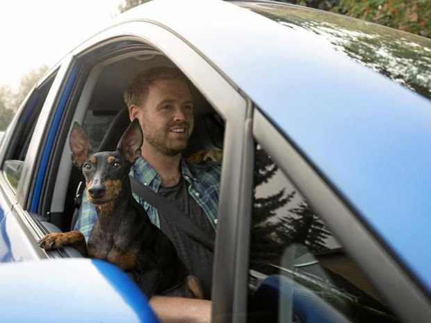 Driving with your pet on your lap is against the law.