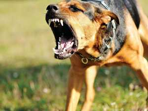 DOG ATTACKS: Pets wounded on weekly basis in Warwick