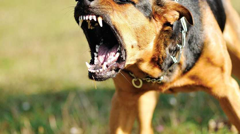 SERIOUS ATTACKS: Dogs are inflicting serious flesh wounds on pets on a weekly basis in Warwick.