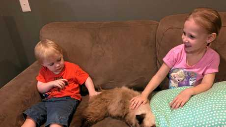 HAPPY DAYS: Amelia, 5 and Odin, 2 were stoked to have their pet cat Sid return home after a seven-month-long adventure. ANd they have no idea what he has been up to.
