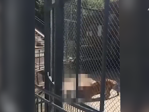 Zookeeper mauled to death