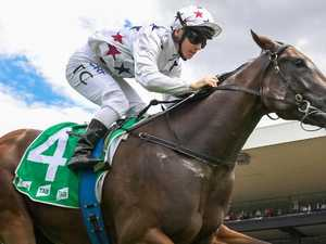 Sunlight shining bright for Slipper