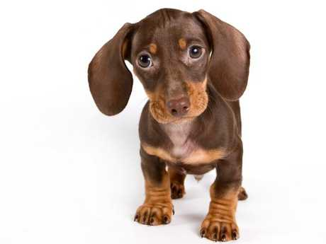 It is unclear whether the puppy was dead or alive. Picture: iStock