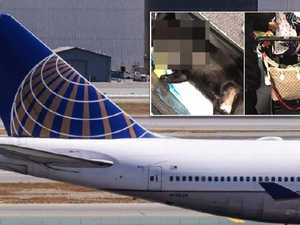 United apologises after dog dies on flight