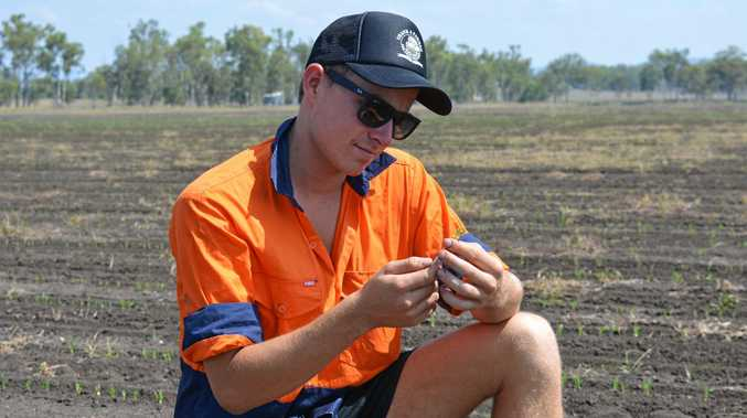 RUNNING THE SHOW: Forest Hill farmer Mitch Brimblecombe inspects a newly planted crop.