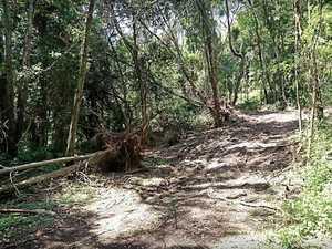 Mining company denies clearing rainforest near Amamoor