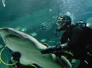 VIDEO: Sharks make 1000km journey to the Coast