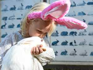 Egg-cellent ways to have a pet-friendly Easter