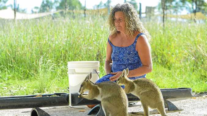 ENDANGERED: Tina Janssen is furious with the State Government bureaucracy over the management of the endangered Bridled Nailtail Wallabies.