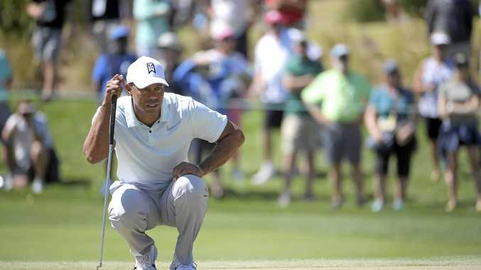 Tiger stalking in Florida tournament
