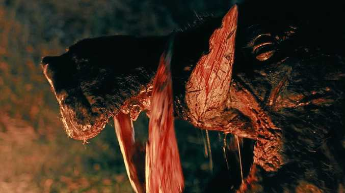 The boar from Boar, a new horror film from writer and director Chris Sun.