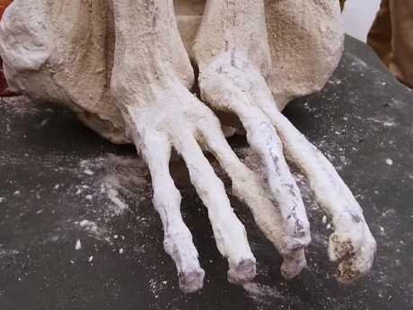 """'Mary's"""" three-toed feet."""