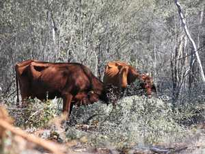 Vegetation laws strike at heart of southwest