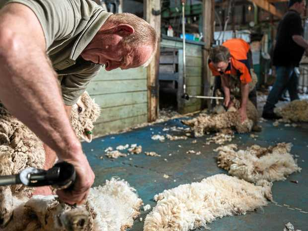 SHEAR DROP-OFF: What was once a king trade in Inglewood is becoming a lost art and an ageing workforce of shearers is worried there will be no one to replace them when they retire.