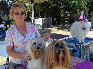 MURGON SHOW: Record entries for dog show
