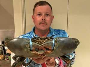 WHOPPER: Monster mud crab caught in Calliope