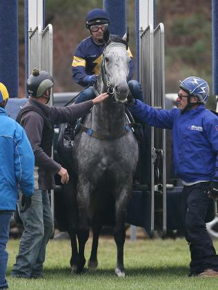 Surprised attendants help Chautauqua out of the barriers. Picture: Michael Klein