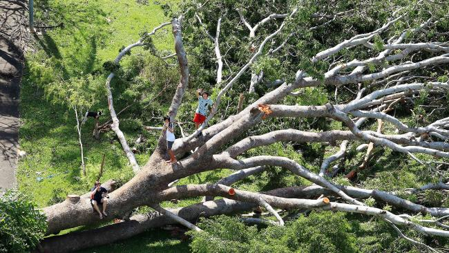 Cyclone Marcus created an extra playground for kids who climbed on the fallen trees it left behind. Picture: Justin Kennedy