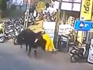 Woman sent flying through the air by bull
