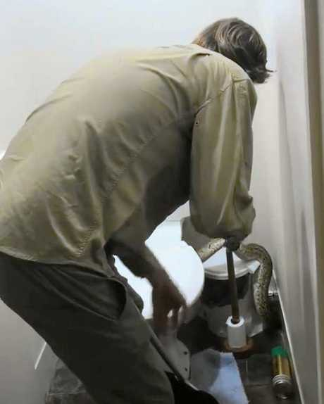 Snake Catcher Noosa's Luke Huntley catching a huge 6-foot python in a Mountain Creek family toilet.