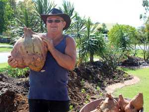 GREEN THUMB: Kawungan local Ivan Weatherhead grew