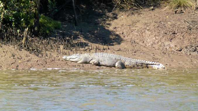 Croc sightings: Predators on the move