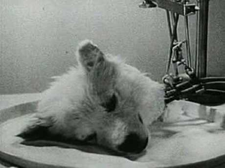 Soviet experiments on dogs were captured in the documentary, 'Experiments In The Revival Of Organisms'.