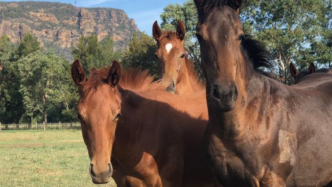 The half-brother to Written By, left, and the half-brother to Sunlight, right, have become the best mates at Widden Stud.
