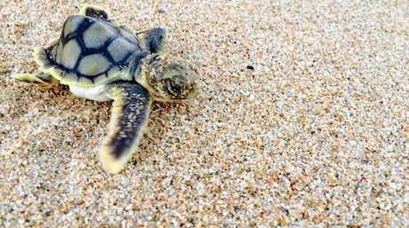 PHOTO OF THE WEEK: Jordan Miller's cute snap of a turtle hatchling.