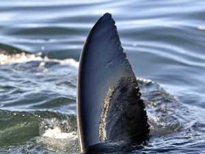 Sea Shepherd slams 'soft' penalty for rogue shark contractor
