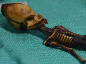 Mystery of 'alien' skeleton solved
