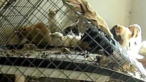 WATCH: 'Faeces on every surface' in animal cruelty horror