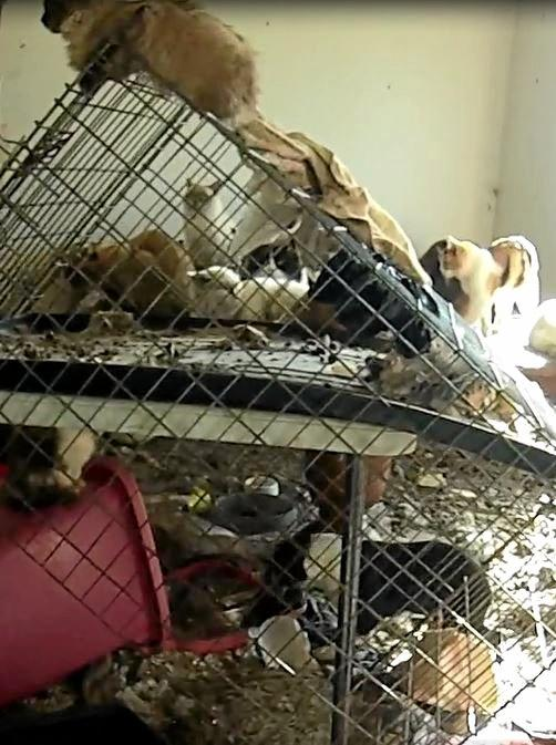 HORRYFYING: The NSW RSPCA video showed the appalling conditions inside Valerie Hicks' home.