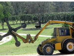 Mango season wraps up at Pershouse farm