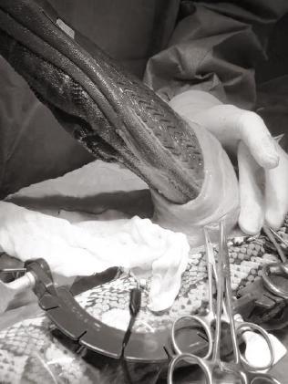 Vet Josh Llinas removes the slipper.
