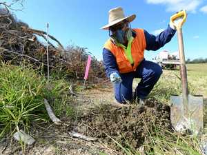 Biosecurity officers to target fire ants in our region