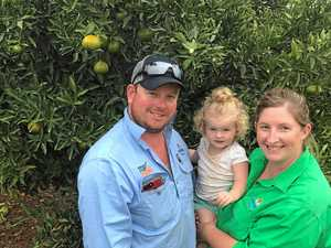 Citrus farmers make the most of produce