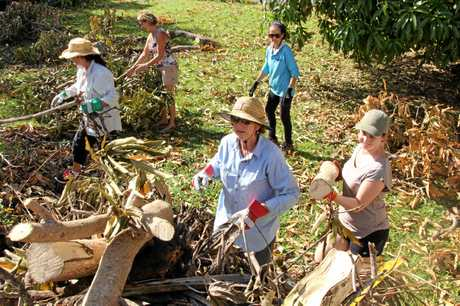 Members of Volunteer Whitsundays clear toppled trees in Cannonvale on Saturday morning.