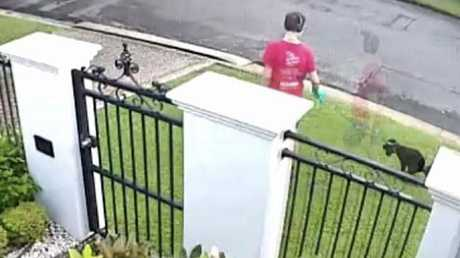 David Deaned's cameras captured the dog poo bandits in action. (Pic: Facebook)