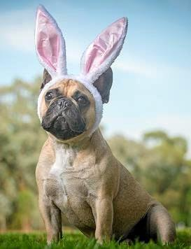PETstock veterinarian Dr Rod Sharpin has alerted people to the dangers of feeding pets chocolate and other toxic foods during the Easter celebrations.