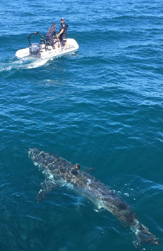 A shark follows police at Tapley Shoal. Picture: SAPOL