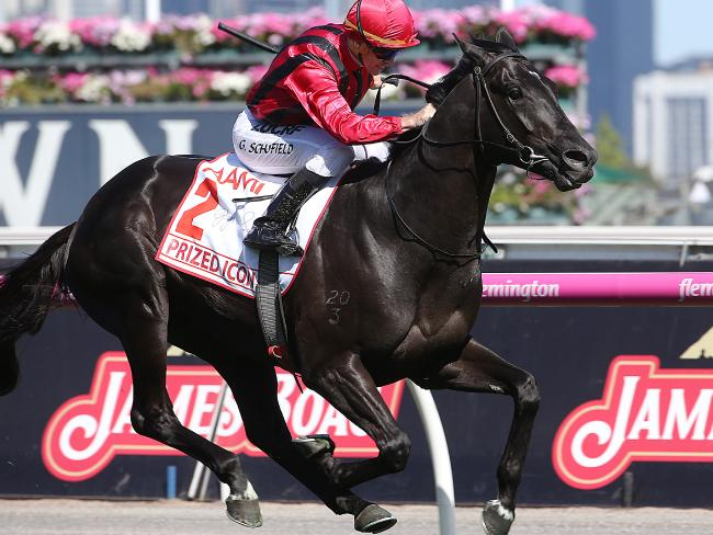 Victoria Derby winner Prized Icon is a leading candidate in the Doncaster Mile. Picture: Ian Currie