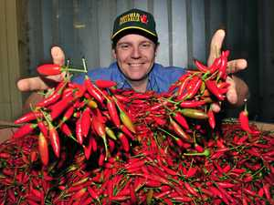 Humble beginnings for Australia's biggest chilli producer