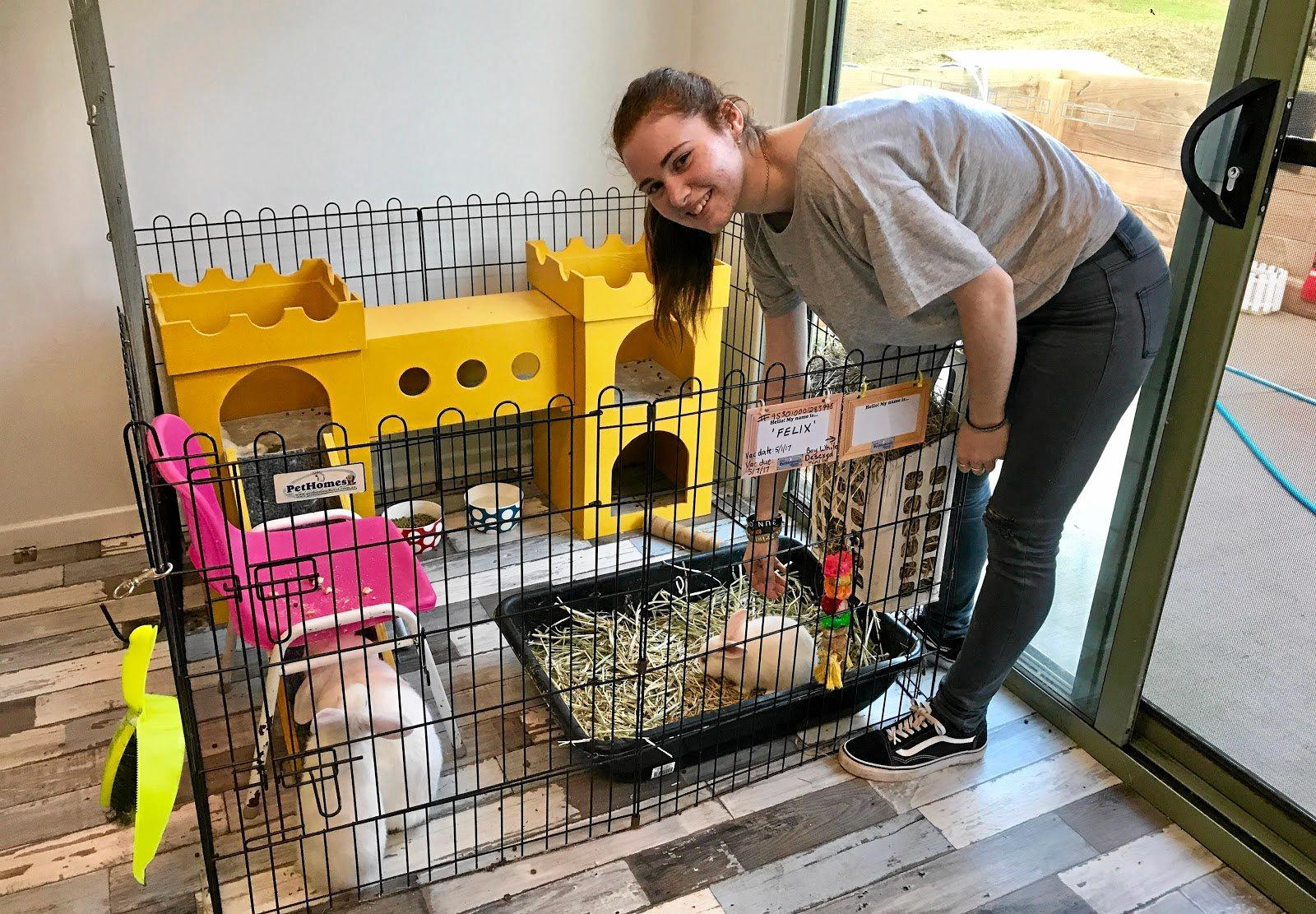 SAVED: The Rabbit Rescue Sanctuary runs a foster program in an effort to rehome its surrendered bunnies, many which come from Queensland.