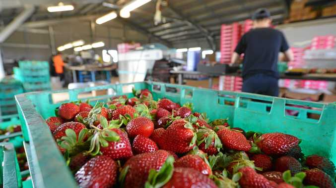 LABOUR SHORTFALL: The National Farmers' Federation is calling for a specific agriculture visa to help fill labour shortfalls.